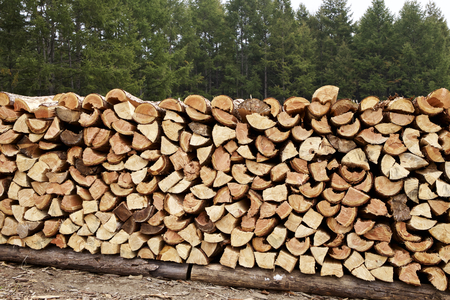 Firewood stacked in autumn