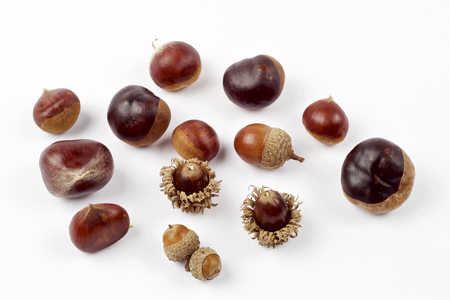 Acorn and chestnuts