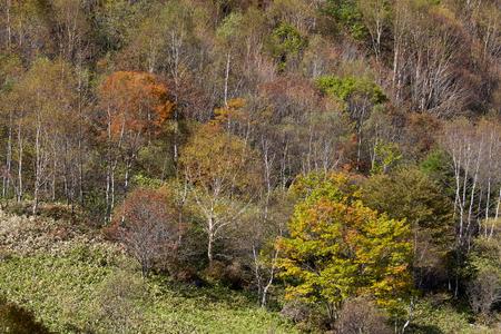 Mt. Sajiki landscape in Japan
