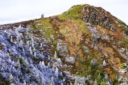 The rime landscape of the high plain