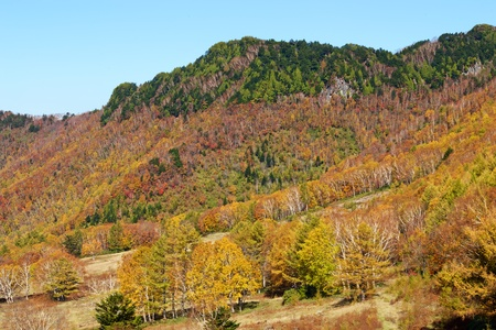View of the autumn leaves of Shiga Kogen's pasture. The autumn leaves of the plateau farm are very beautiful. Imagens