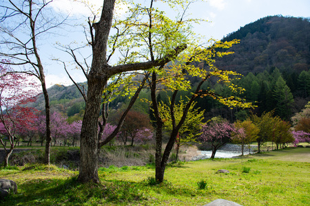 View of the spring Hakuba village Ohira Park in Japan. Stockfoto