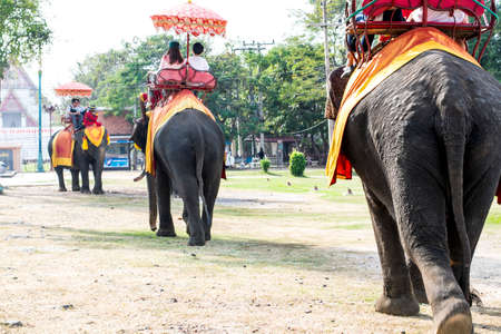 convey: Group of elephant walking after each other
