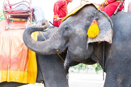convey: Thai elephant Stock Photo