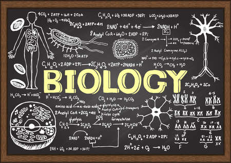 Hand drawn biology on chalkboard. Vectores