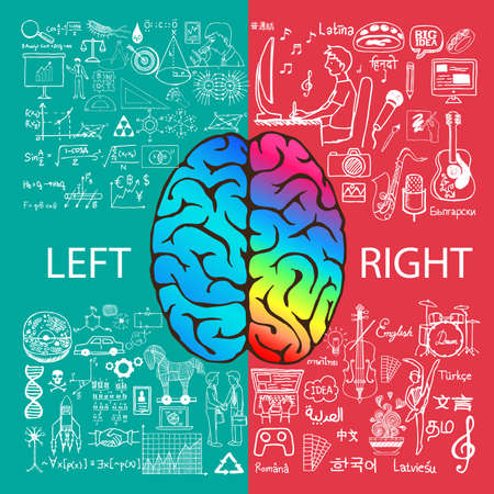 brains: Left and right brain functions with doodles. Illustration