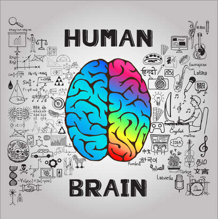 right side: Human brain concept. Vector.