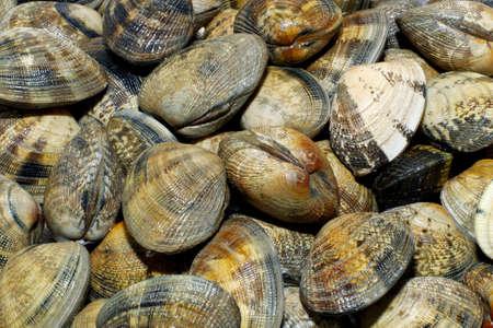 fish vendor: Clams Close-up, for spagetti vongole Stock Photo