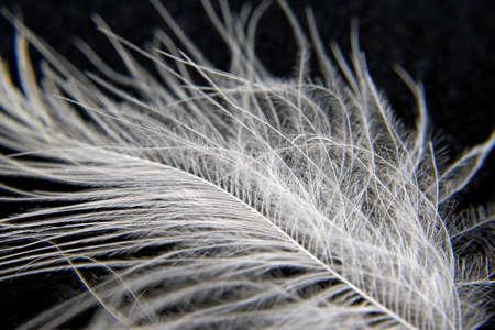 White Bird  feathers, closeup