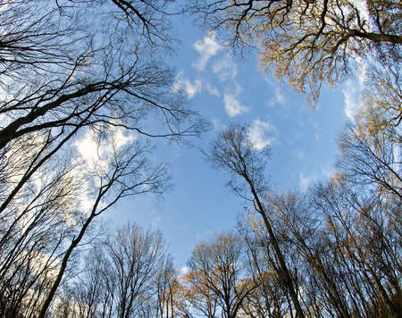 directly below: Treetop in the forest and blue sky, fisheye lens