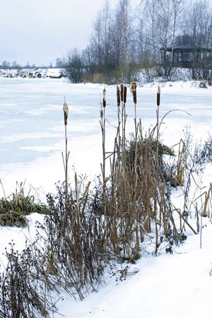Winter Scene - Frozen Lake and Cane. Evening light. photo