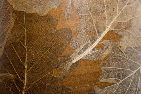 dry leaves texture as autum  background