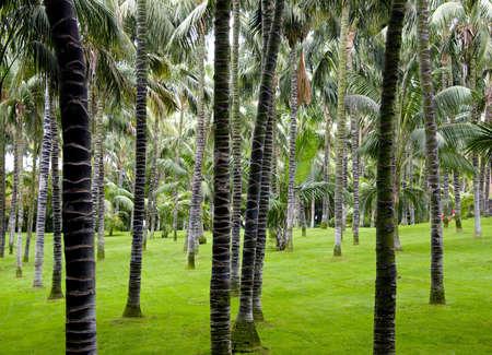 plantation of palm trees on a tropical island Фото со стока