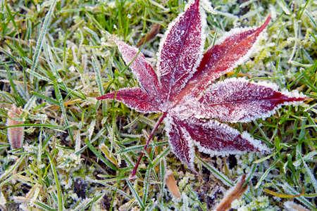 Hoar-frost on a fallen leaf in winter