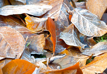 Garden leaves collected and frozen overnight Фото со стока