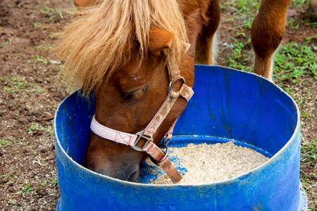 caballo bebe: Cierre plano de caballo que come de la cuchara Foto de archivo