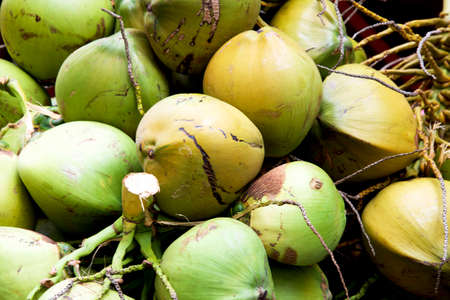 Bunch of big fresh coconuts