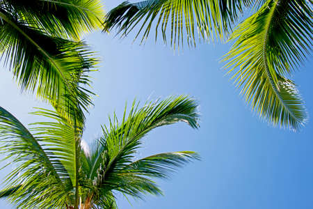 generic location: Palm Trees with Sky on Background Stock Photo