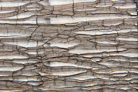 Old palm tree bark texture background pattern