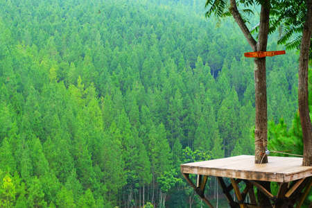 The pine forest green with nature sky tree wood