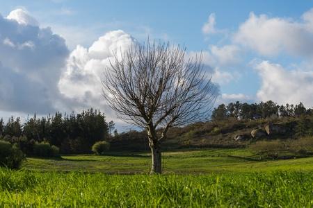 bezlistne drzewa rosnące w polu zielony galicyjskiej Zdjęcie Seryjne