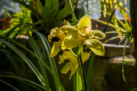 Hybrid orchid.