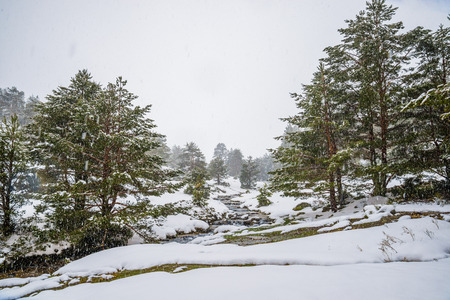 Snowy forest in Madrid mountains.Snowy forest during a snow storm in Madrid mountains. Zdjęcie Seryjne