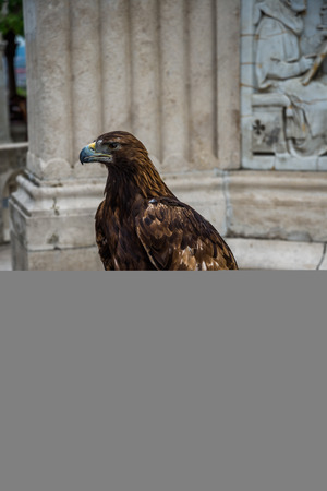 golden eagle: With golden eagle monument background. Stock Photo