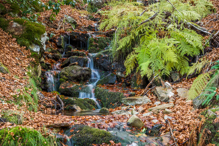 small river: Small river in autumn beech forest.