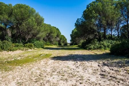 Doñana, Andalusia, Spain.