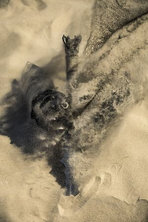 Accessories of a knight isolated on the sand during the day. Conceptual image. Sand is spreading. Banco de Imagens