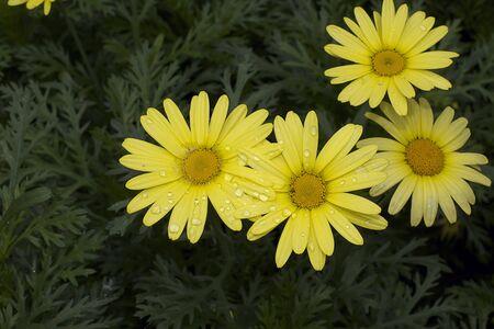 nice yelow flowers