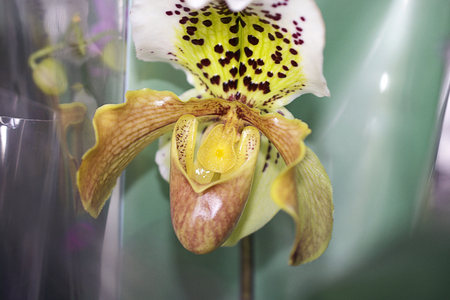Very pretty colorful orchid close up Stok Fotoğraf
