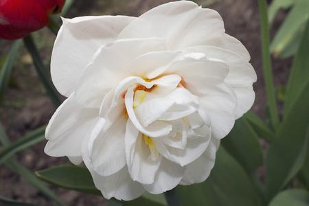 nice spring flower close up