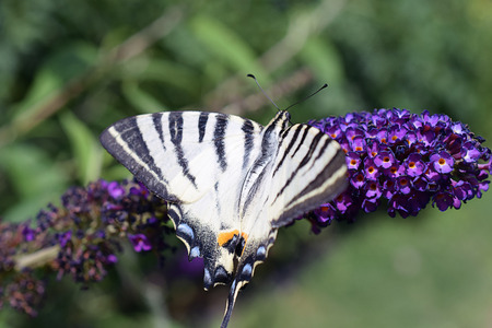 A beautiful colorful butterfly on the flowers