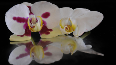 nice colorful orchids on the miurror