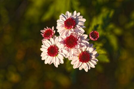 very nice colorful autumn flowers close up