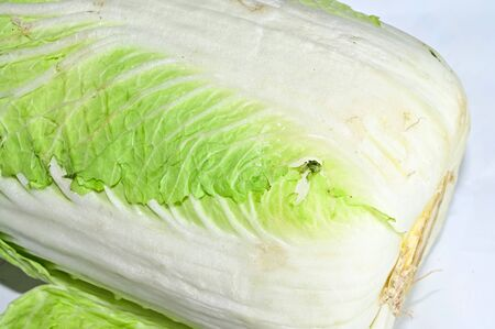 a very fresh green cabbage