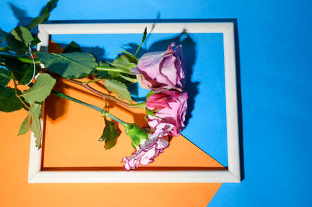 vry nice colored flower in the frame