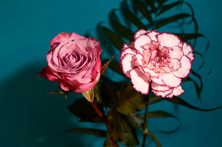 two beautiful colored flower rose and carnation close up
