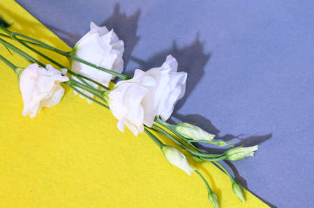 very nice white lisianthus close up
