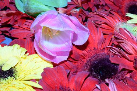patterns o flower close up,colorful gerbera,rose,iris,carnation,tulip