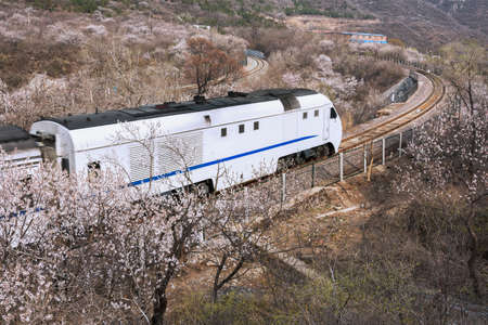 Train travel in the sea of flowers photo