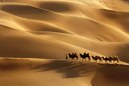 The camel walk in Kumtag Desert
