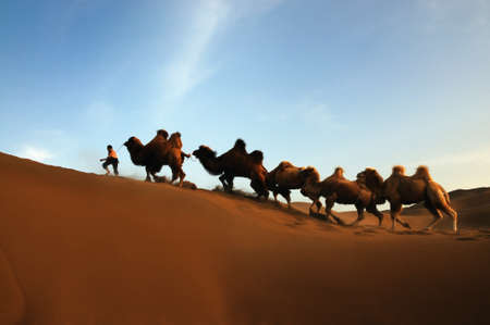 xinjiang: Le chameau promenade dans Kumtag Desert Banque d'images