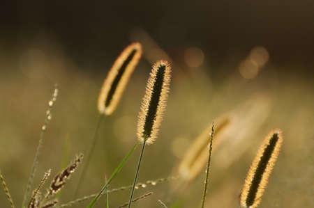 野草: 野生の草 写真素材