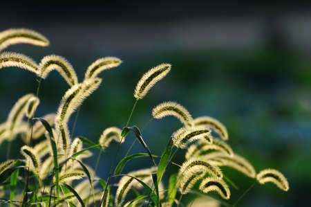 wild grass: wild grass Stock Photo