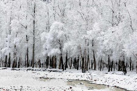 xinjiang: Paysage de neige � kurde Ning, le Xinjiang