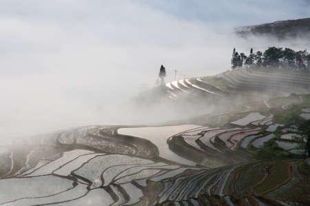 terraced: Terraced fields at Yuanyang, Yunnan