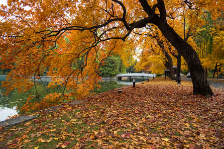 fallen leaves: The autumn leaves